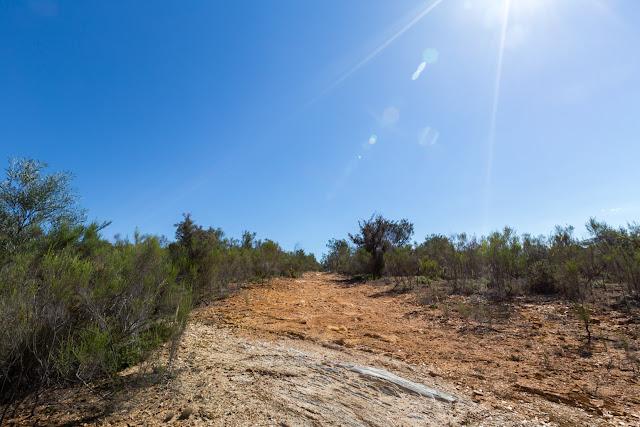 sun lens flare walking track