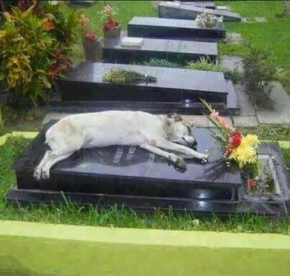 dog sleeps on the grave
