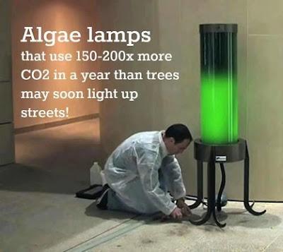 Algae Lamp