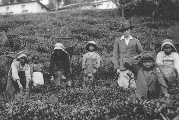 Darjeeling -Tea Planter with Tea Pickers, Steinthal Tea Estate 1930s