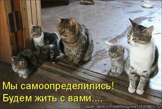 Приколы с котами: Самоопределились
