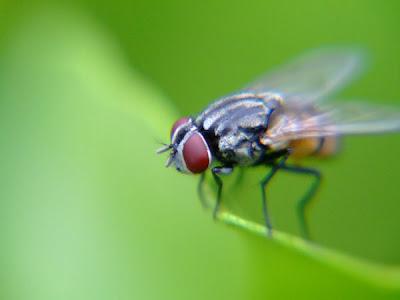 Kenapa Kita Dilarang Terus Buang Minuman Yang Dijatuhi Lalat