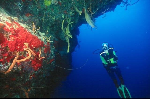 Résultats de recherche d'images pour «cayo largo diving center»