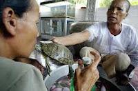 Terapi kura-kura
