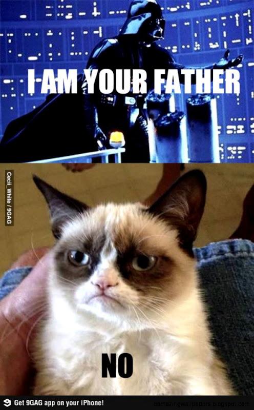 Grumpy Cat Internet Meme Invades Star Wars   Socialeyezer