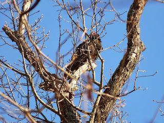 lone vulture