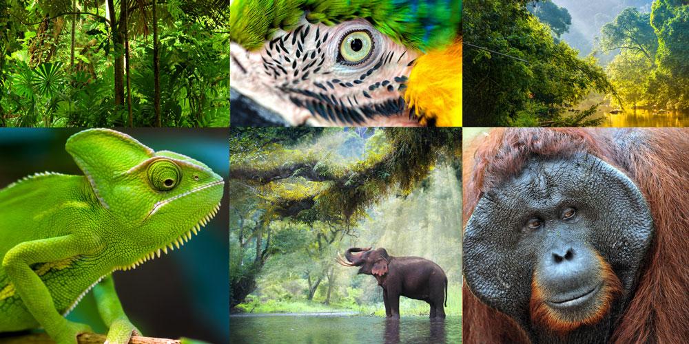 Ajude a salvar a natureza!