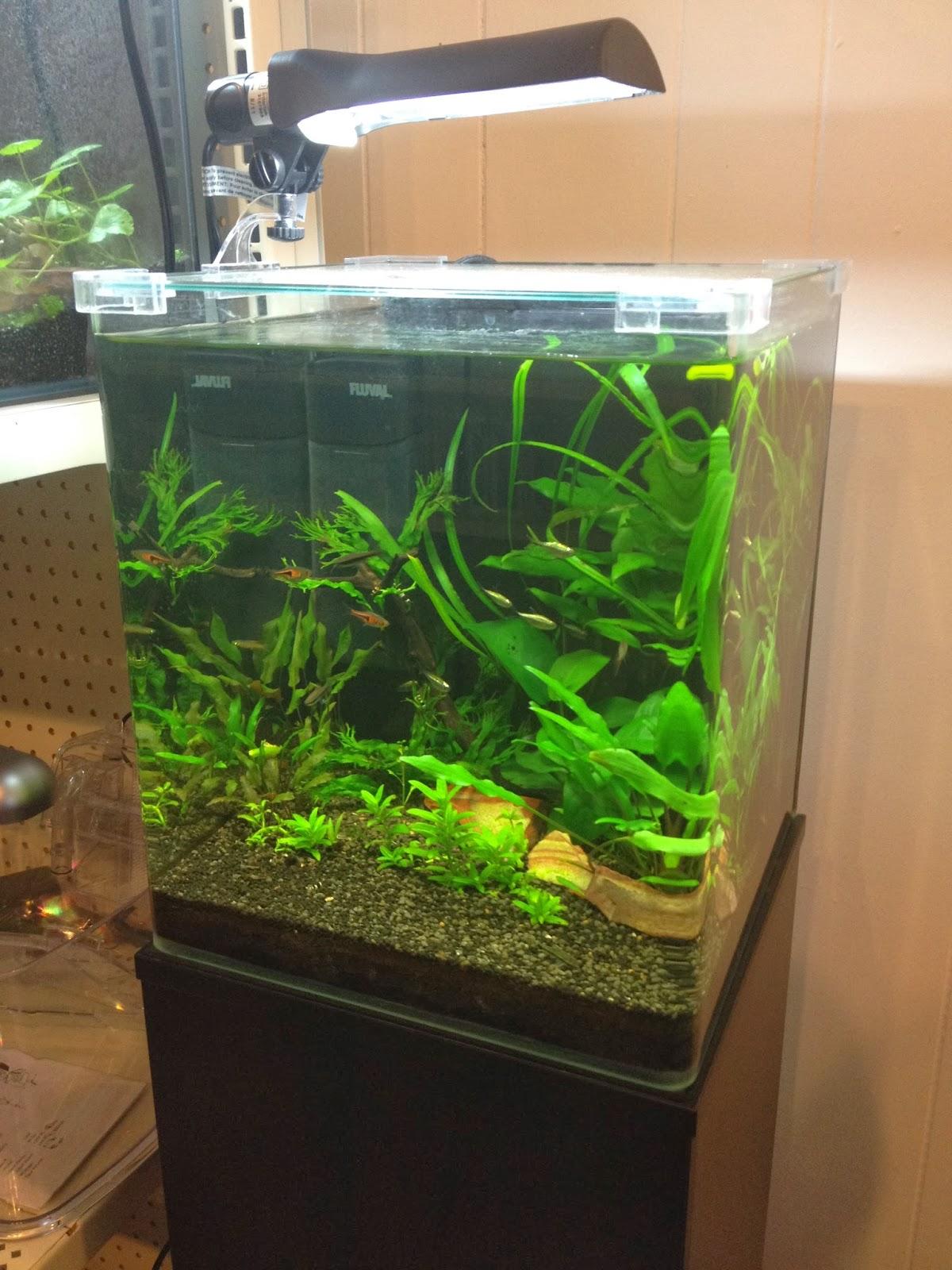 Fluval Ebi Aquarium