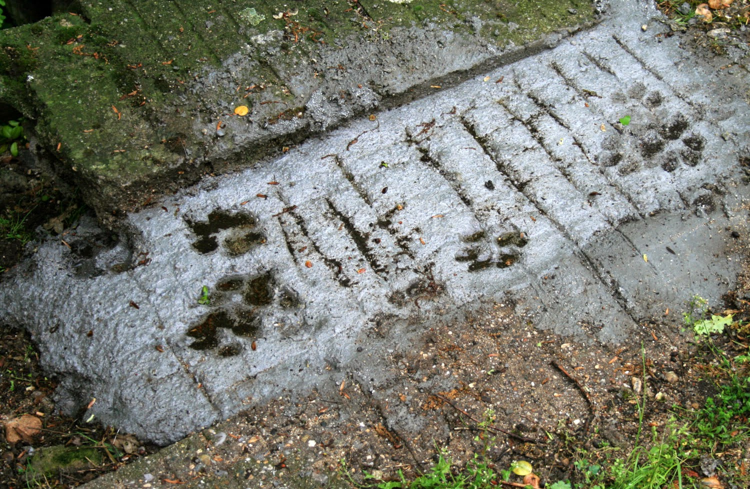 Rambo's footprints in the concrete