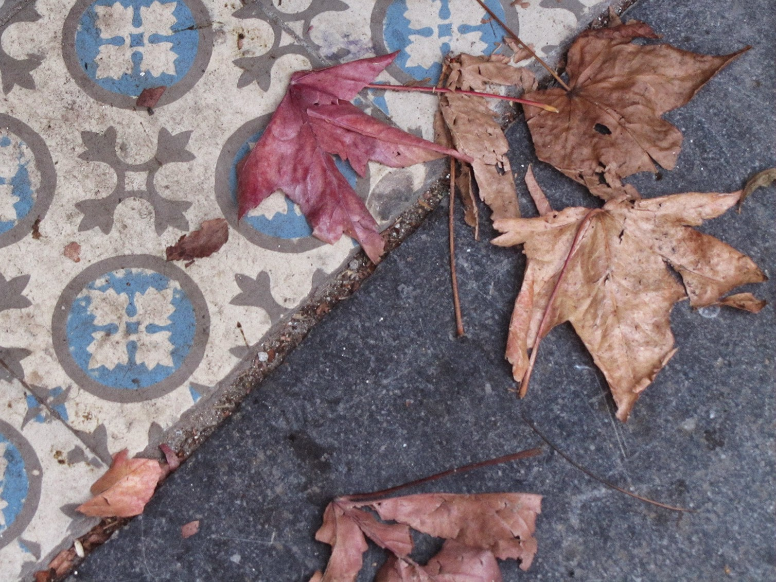 diagonal with tiles and leaves