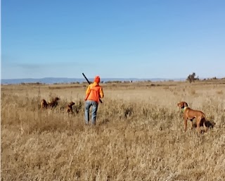 They love training with the Pam the bird lady and hunting partners Dixie and Grady.