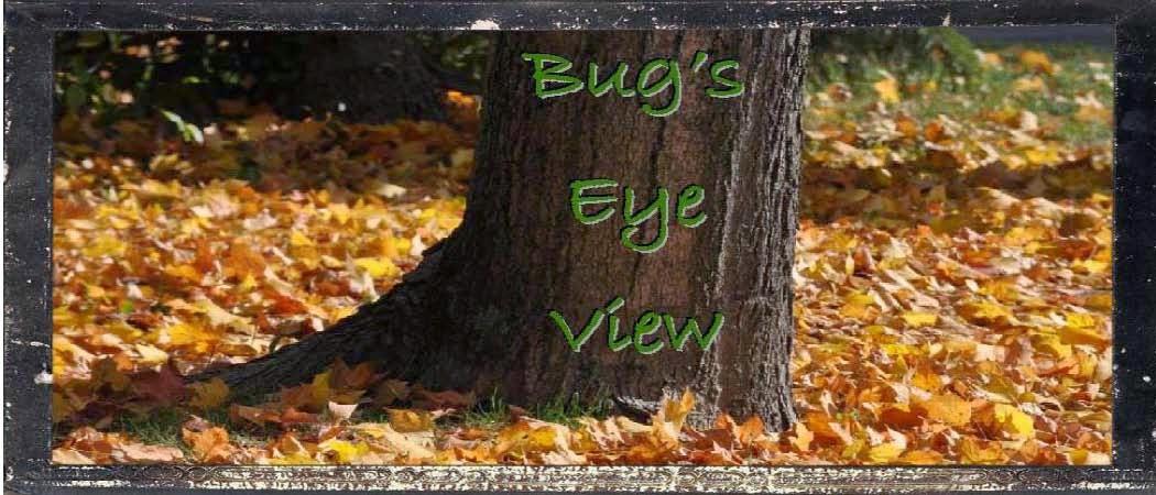 Bug's Eye View