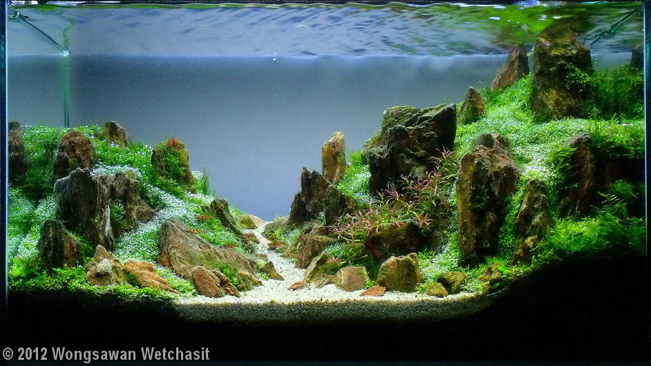 Aquatic jungle resultados aga 2012 - Aquascape espana ...