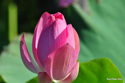 Flores muy hermosas