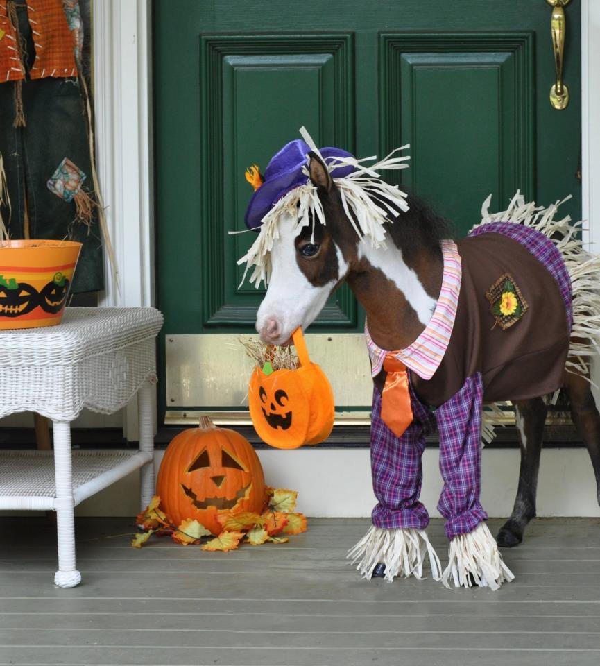 2019 year look- Halloween Happy horse pictures
