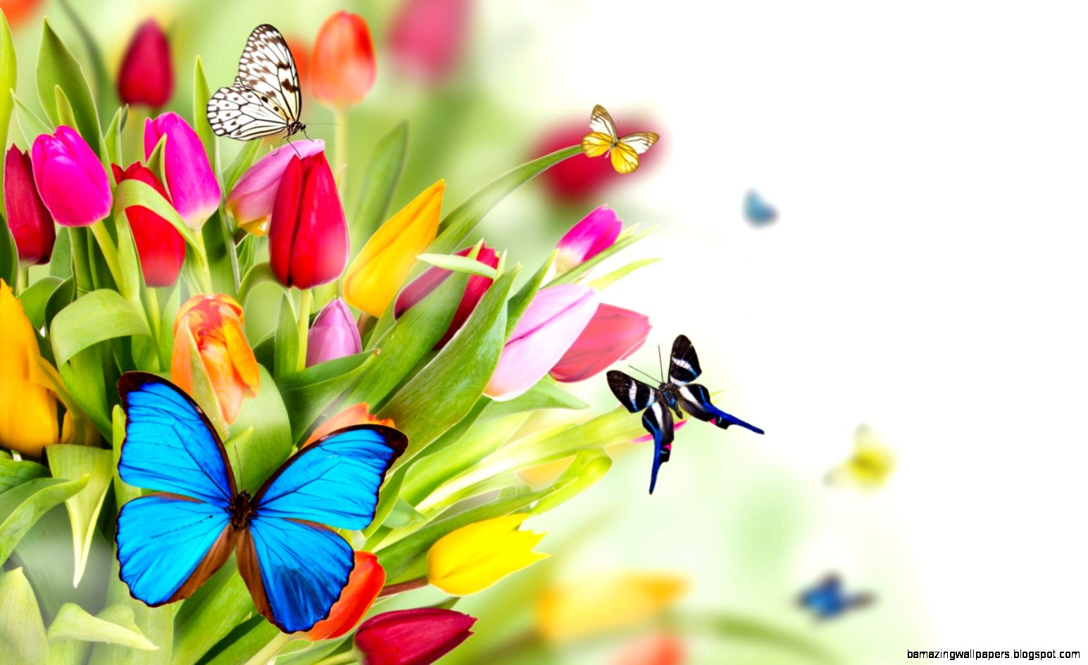 Butterflies Hd Wallpaper 1600x1200PX  Wallpaper Butterflies