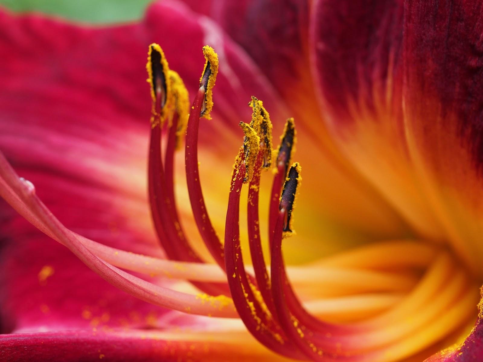 Pollen #centralpark #flowerpower #nyc 2014