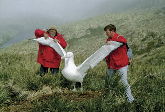 Rules of the Jun...10 Interesting Albatross Facts For Kids