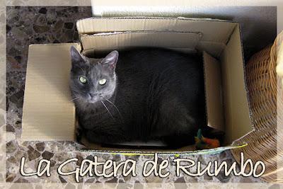 Rumbo gato caja
