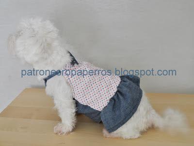 perro sentado con vestido