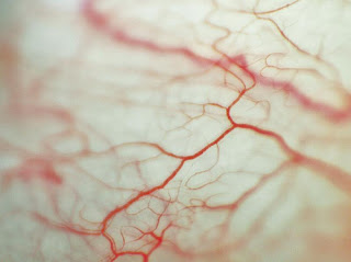 vasos sanguíneos do olho