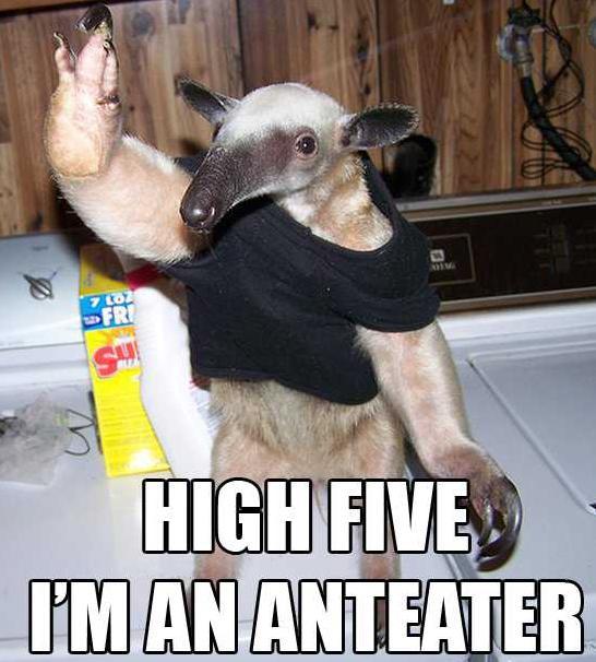 Funny Giant Anteater  ...