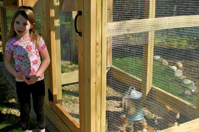Chickens, Coop, chicks, backyard chickens, Autumn Grace McGrath