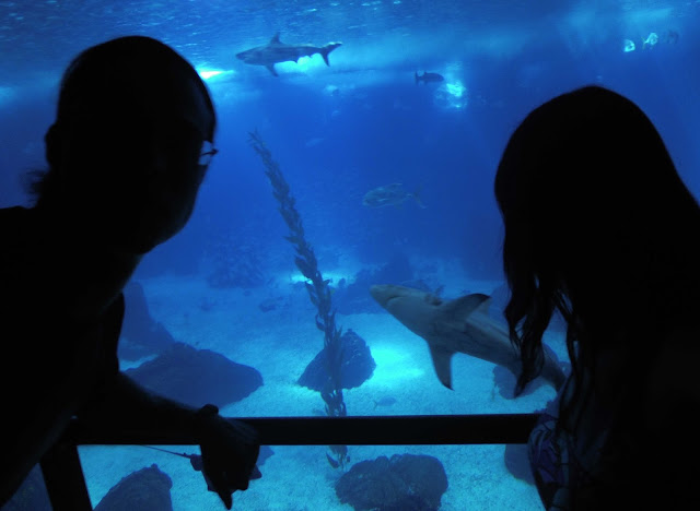 oceanario lisboa tiburones