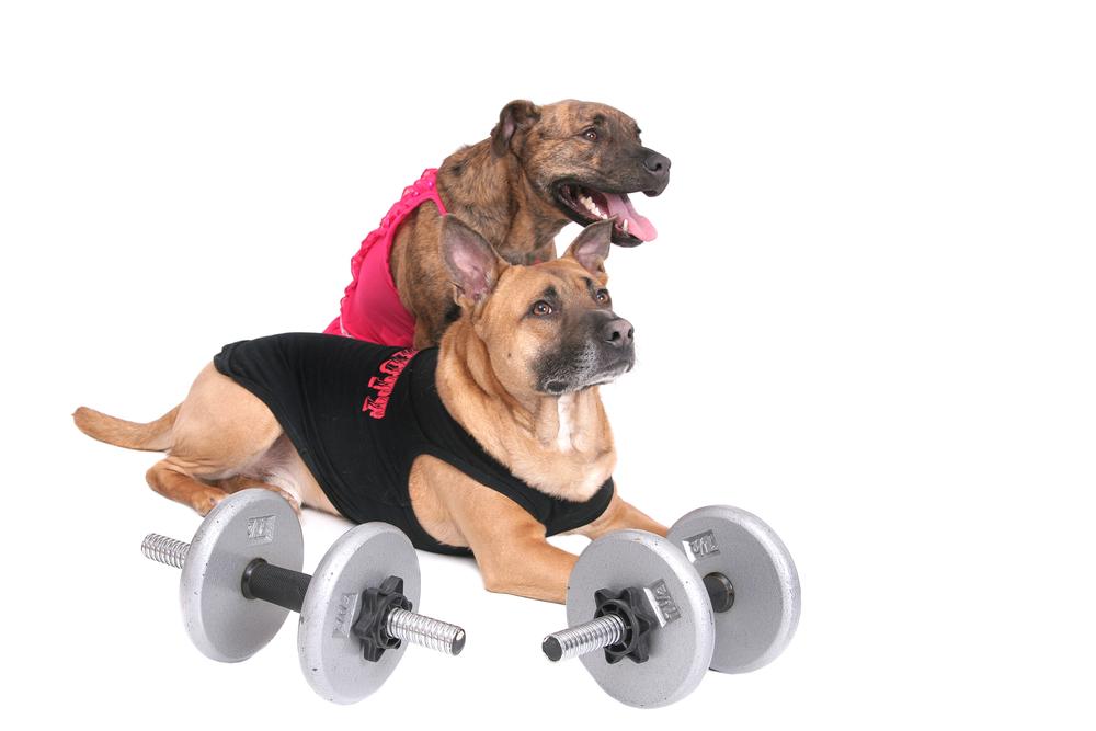 Exercising Dog Video