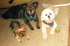 "In loving memory of ""The Boys"" who started our RV adventure with us in 2008.  We miss you all!"