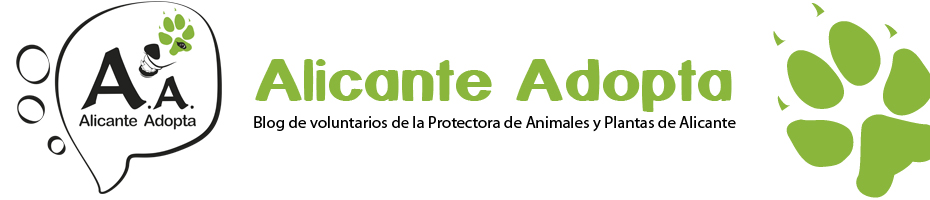 ALICANTE ADOPTA
