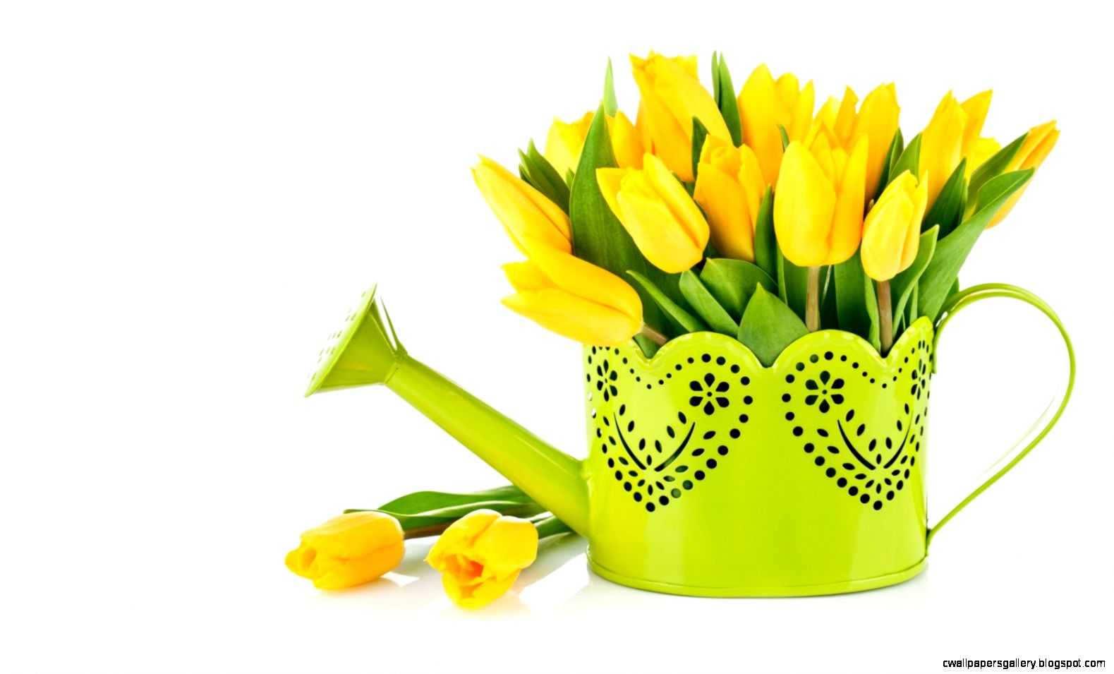 watering flowers yellow tulips bouquet green photo full hd