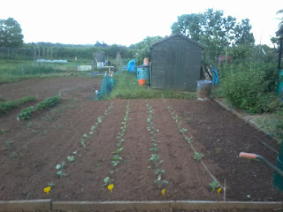 the brassicas have survived even without the net.