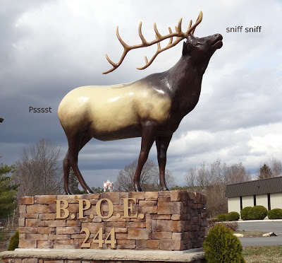 elk_farting,elks_club,Bangor