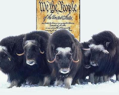 Constitutional Stampede