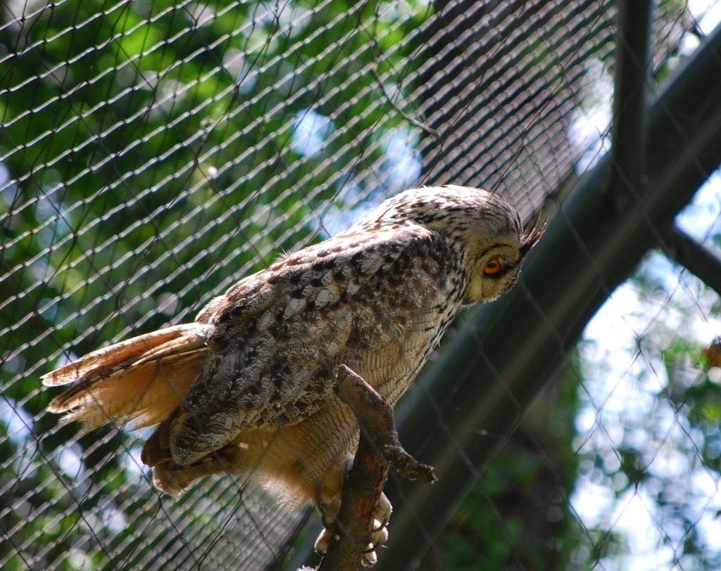 Parque e zoológico Tierpark Lange Erlen Basel Suíça
