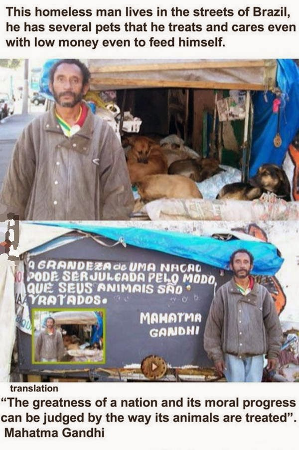 People doing amazing things for animals (28 pics), a homeless man in Brazil takes care several pets with low money even to feed himself