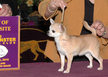 Who Is The Best Know Dog Show Handler In Europe