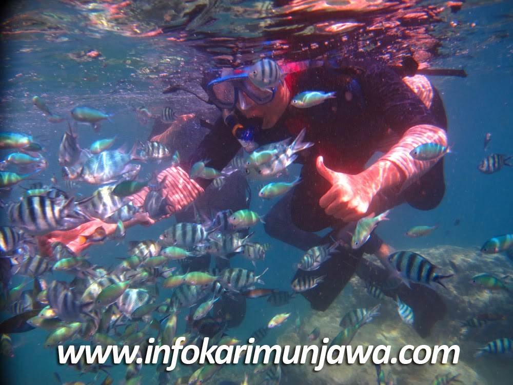 Paket Karimunjawa April 2015
