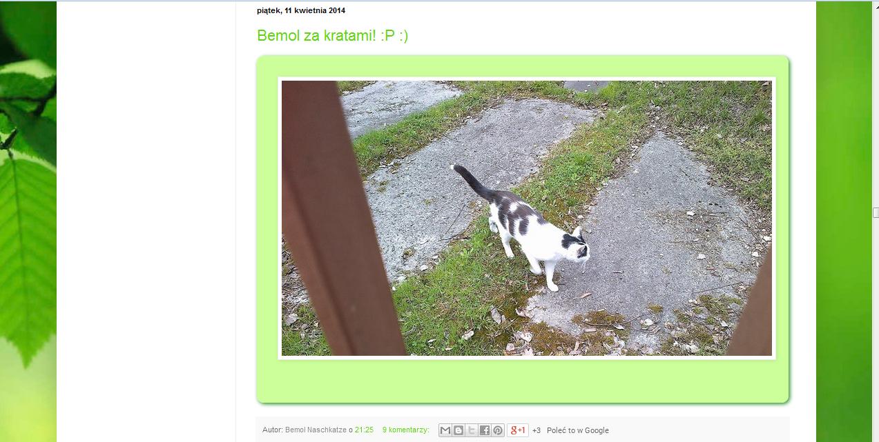 http://katzebemol.blogspot.com/