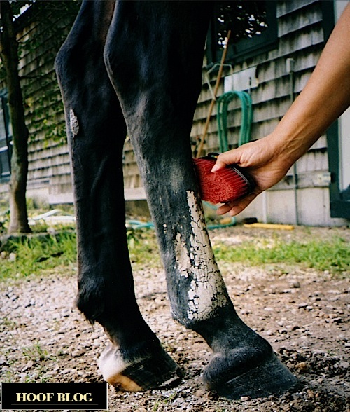 Horse poultice residue