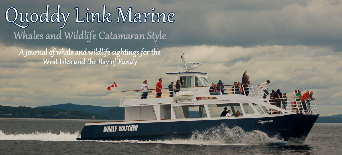 Quoddy Link Marine - Sightings and Updates