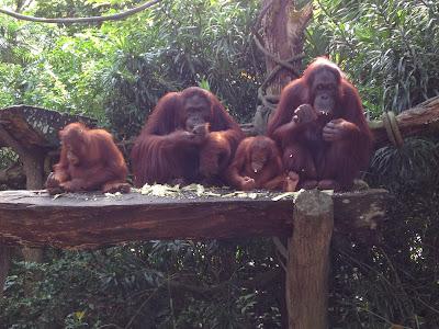 "<a href=""http://vionm.com/"">Thailand</a> <a href=""http://vionm.com/things-to-do-in-bangkok-thailand/thailandhoneymoon-explore-the-beauty-of-koh-samui/"">Beach</a>: The World's Best Rainforest Zoo!"