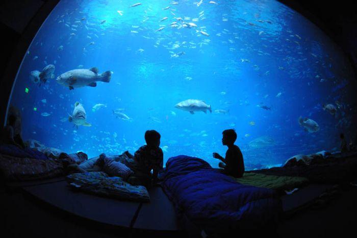 Incredible World   s Largest Aquarium in AtlantaUnderwater Hotel Room At Night