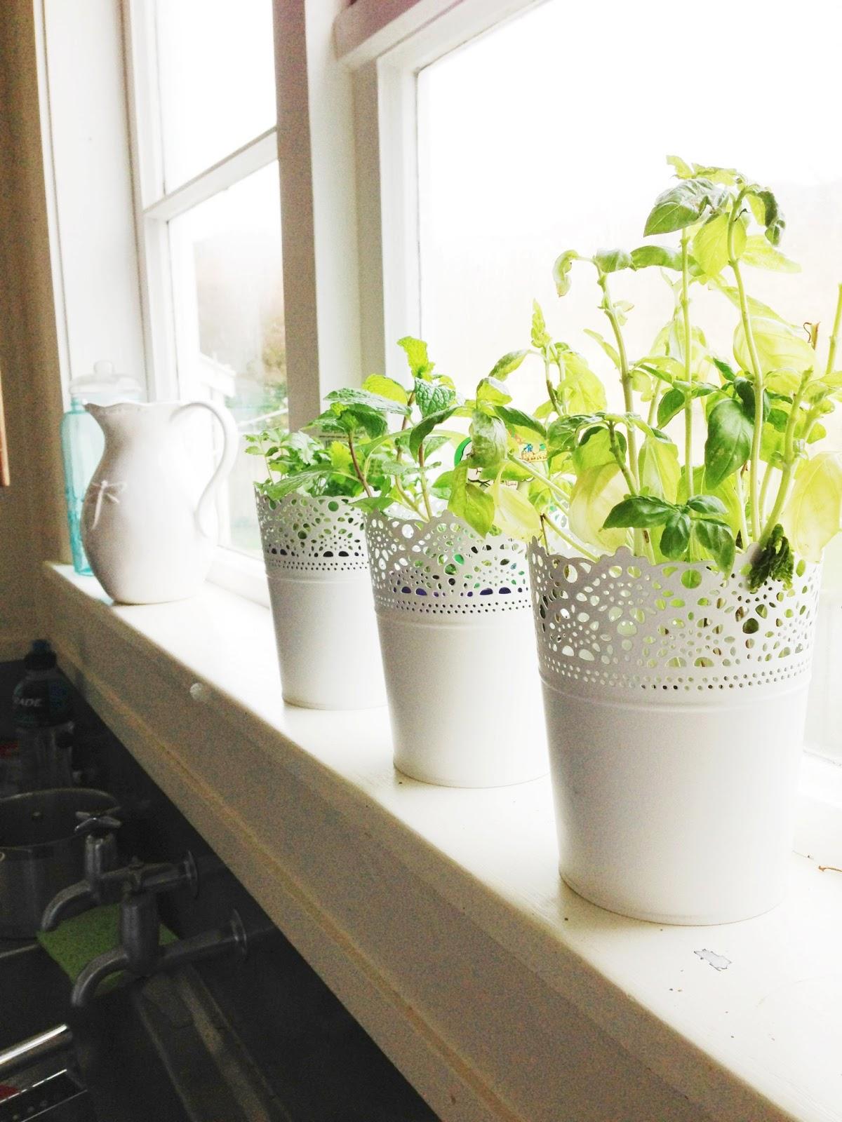 Herb pots for kitchen - Herb Pots