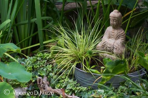 In un giardino mini pond per piccoli spazi for Piante dello stagno