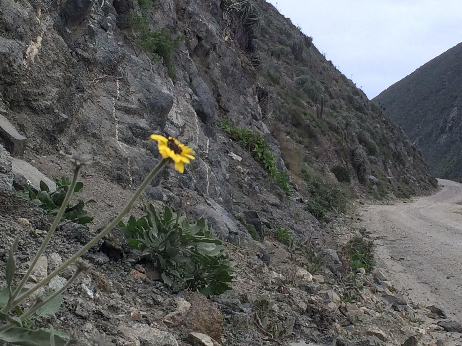 Cerros del Limarí