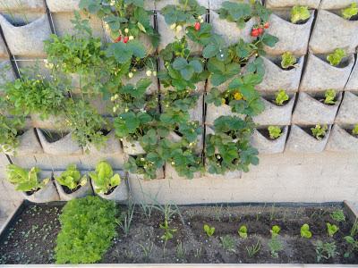 Huerta y jard n producir frutas verduras o plantas - Plantas aromaticas jardin ...