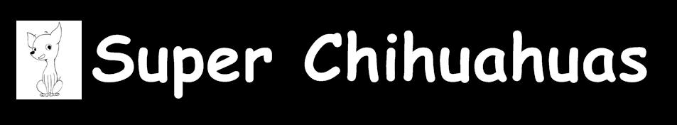 Chihuahuas Maravilla