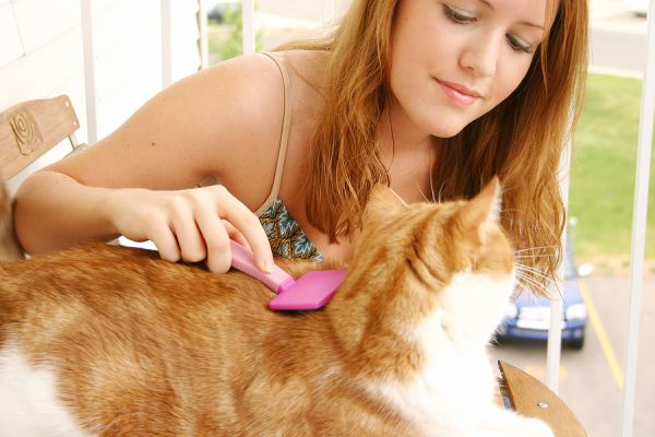 Ways to Prevent a Cat Flea Infestation